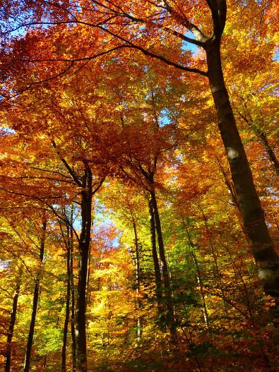 forest-by_loggawiggler_pixabay_cc0